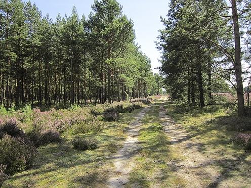 Waldweg Nemitzer Heide