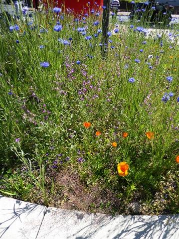 wildblumen2