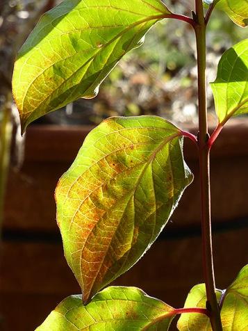 ..dank Sonnenlicht ein fast frühlingshaftes Grün, und das im Herbst.