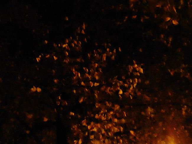 Fast poetisch sind die Blätter beleuchtet..