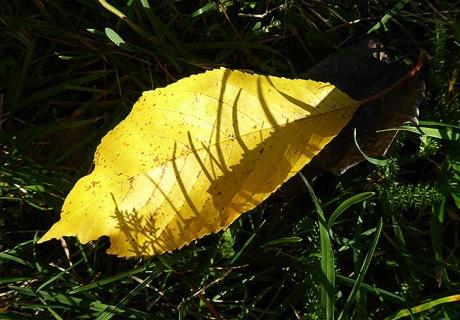 Eine Miniatur auf einem Herbstblatt.