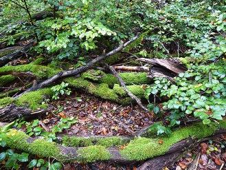 Viel Totholz für noch mehr Leben.