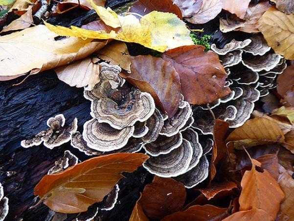 Fast versteckt unter den fallenden Blättern.