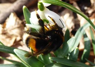 Warme Farben strahlen Pelz und Pollen aus.