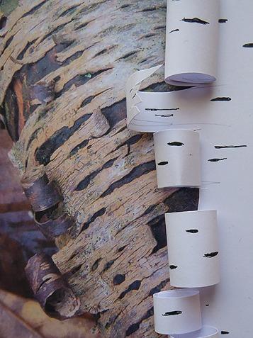 4e Die abstrakte Assoziation zu einem weiteren Fotoausdruck mit ähnlicher Rindenstruktur